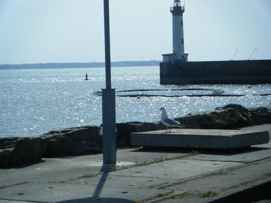 jour 1: accueil d' 1 cormoran, avant les Amis de la Nature de St N.