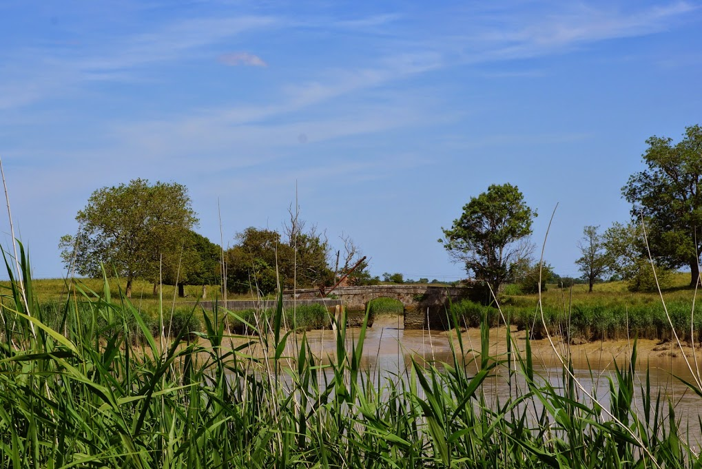 les marais autour des bassins...