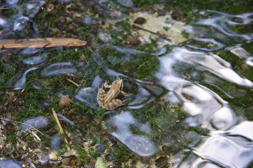 une élégante grenouille !
