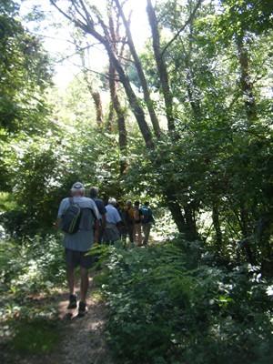 chemin de terre à l'ombre des bois.