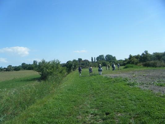 large chemin herbeux !