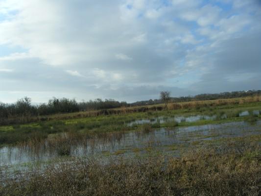 il y a de l'eau dans le marais
