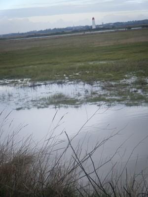 le marais humide !!!